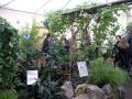 AIR SHOW: Tropical Butterflies - At Palmengarten Frankfurt Am Main
